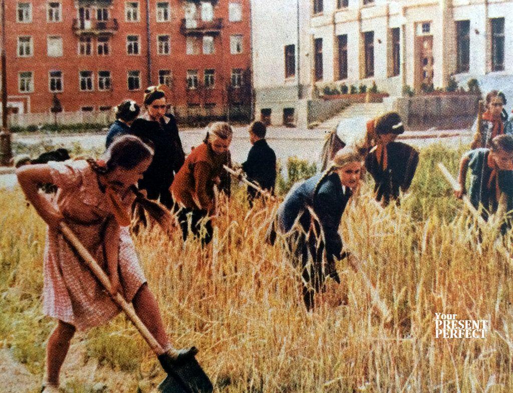 1956. Ребята обрабатывают участок у недавно выстроенной школы.